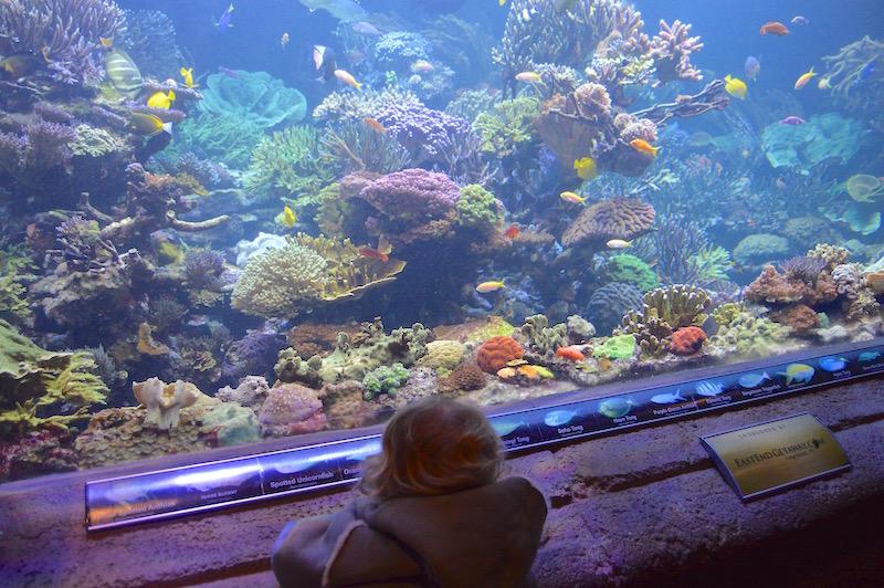 Riverhead Aquarium