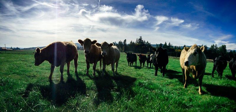Step By Step Farm Herd