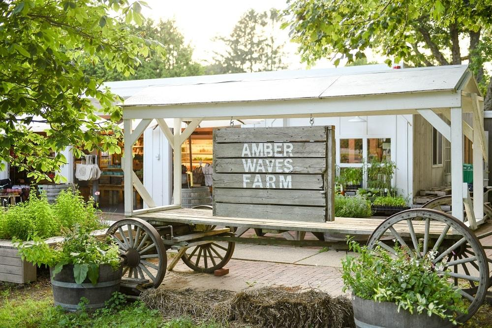 Amber Waves Farm sign-min