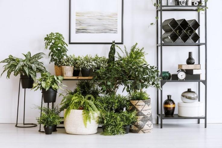 plants in home interior decor